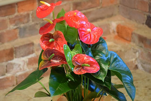 お祝い花鉢-1の写真2